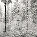 Backyard Low Snow 8-12 AM by Barking Dog Photos_Bruce Gregory