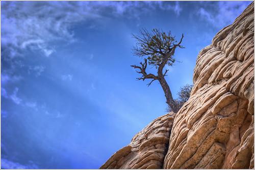 hdr pinyon pine tree sky clouds redrock sandstone cliff camelback mountain utah wilderness nature landscape nikon d750