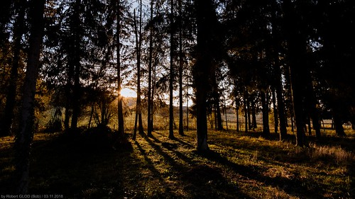 lu lamadelaine minett dusk europe evening forest luxembourg nightfall petange sunset sundown tree twilight péiteng pétange