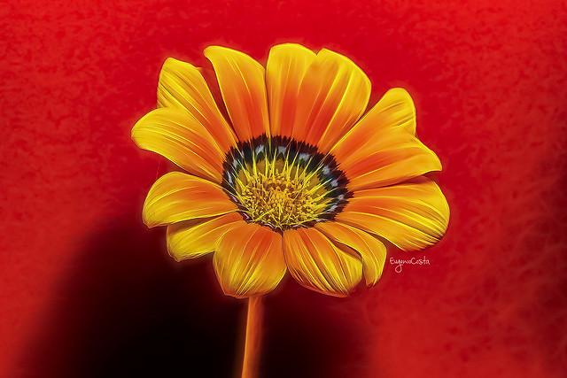 Margherita (2) / Daisy flower (2) Red