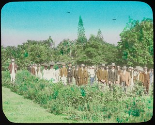 Large group of people standing amongst garden beds, Queensland, ca. 1910