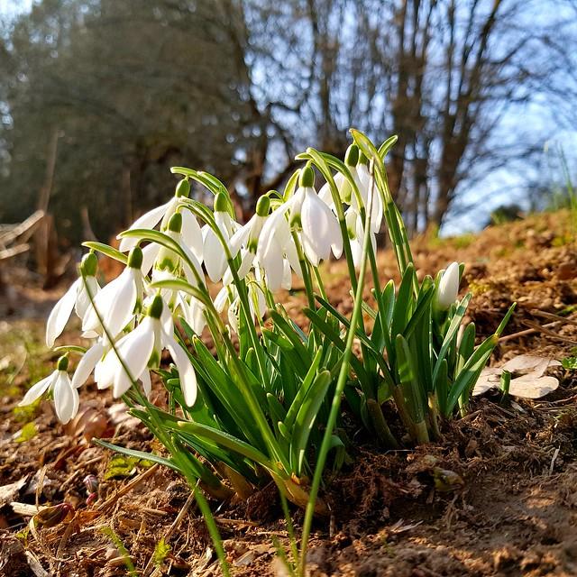 Spring......