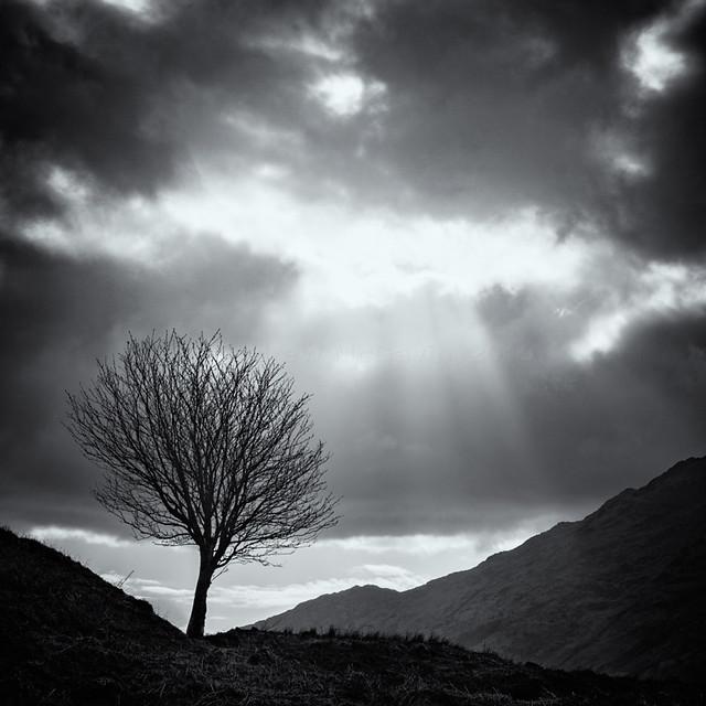 Sunbeams and a tree