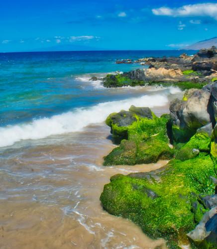 Seaweed on the rocks | by Kirt Edblom