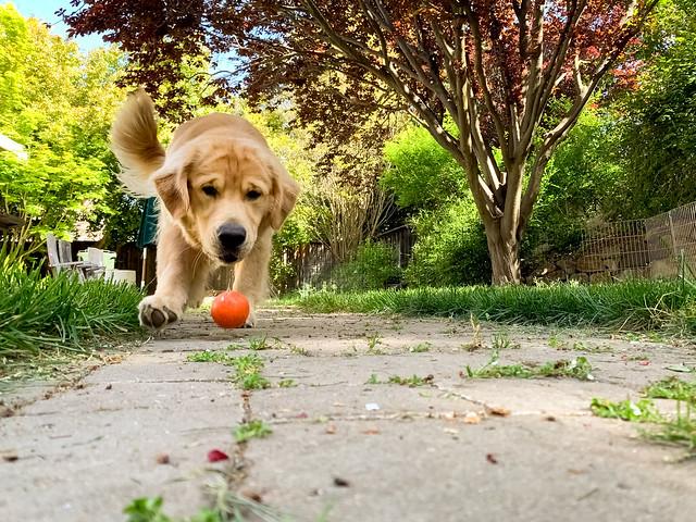 Fetch 15/52