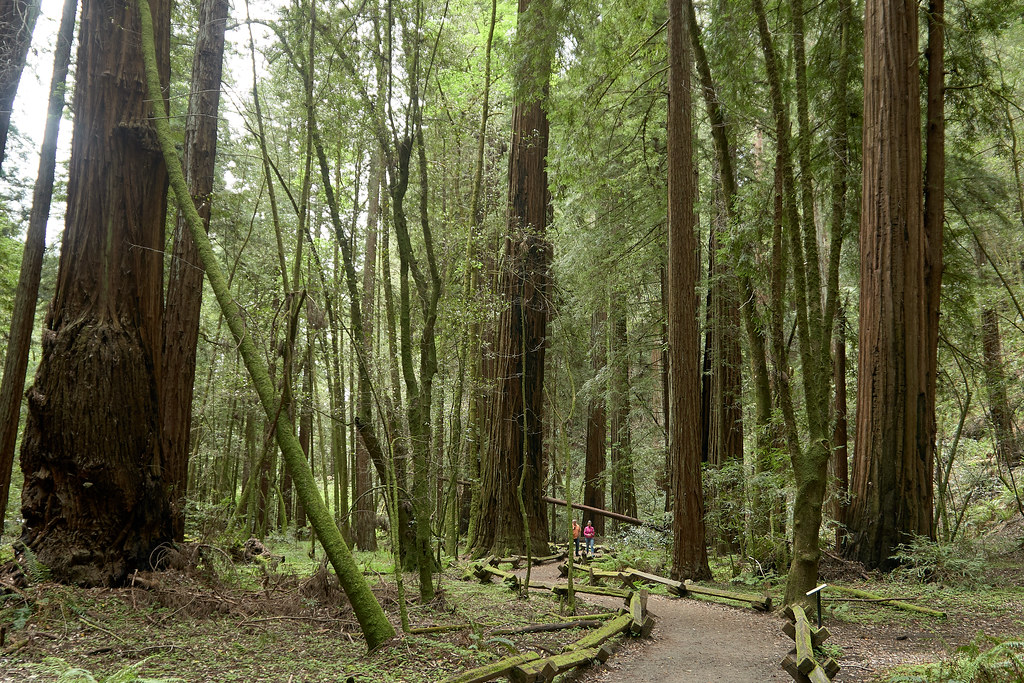 Armstrong Redwoods Reserve