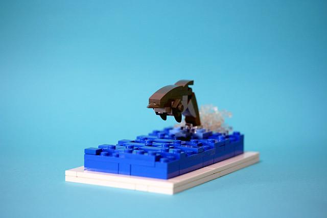 bottlenose dolphin 01