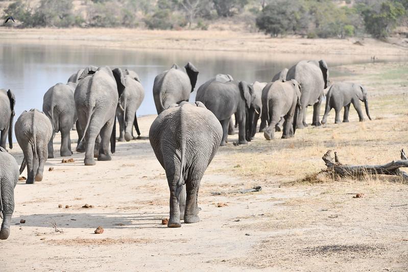 2286 Elephant