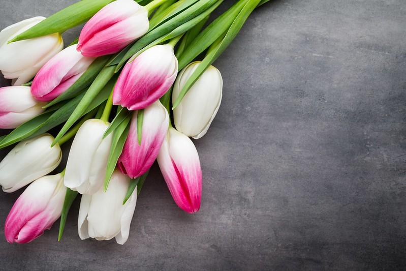 Обои цветы, букет, тюльпаны, розовые, white, белые, fresh, pink, flowers, beautiful, tulips, spring картинки на рабочий стол, раздел цветы - скачать