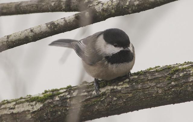 Noisy visitor