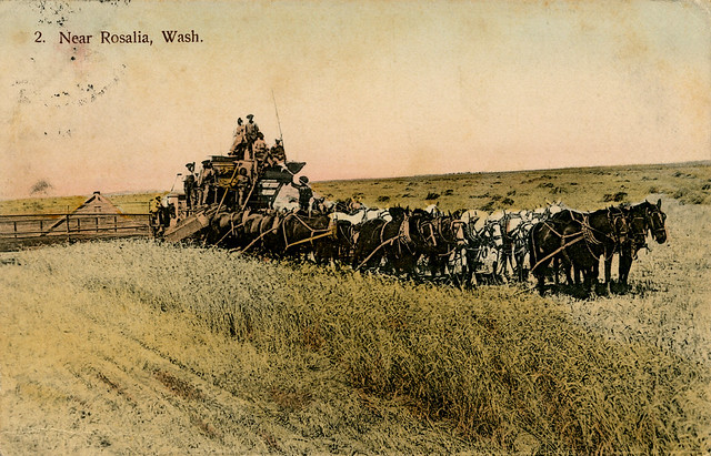 Wheat Harvest, 1912 - Rosalia, Washington