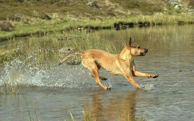 Water Skiing Kelpi