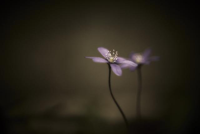 Minimalistic Nature