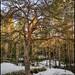 Träd på Kvarnstensberget