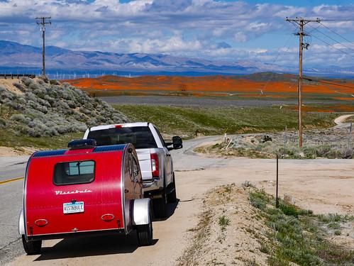 Antelope Valley poppy bloom   by snackronym