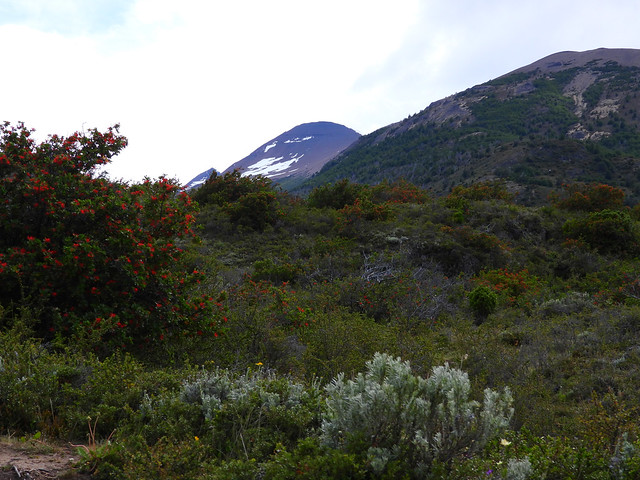 Los Glaciares National Park, Santa Cruz, Patagonia, Argentina