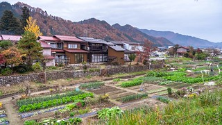 Hida allotments | by FlickrDelusions