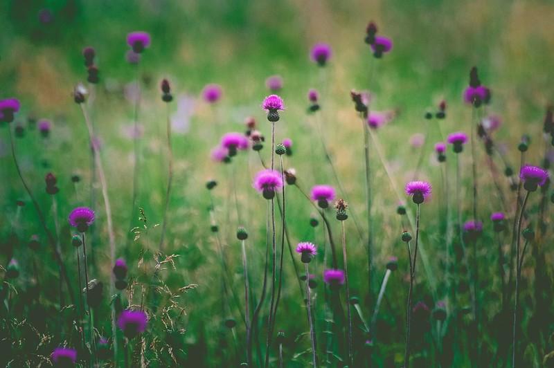 Обои field, flowers, stalks картинки на рабочий стол, раздел цветы - скачать