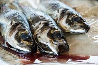 If fish is healthy how come these are dead