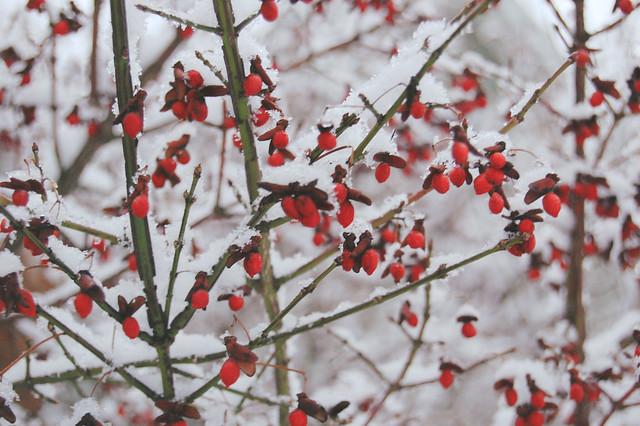 3/365 Snowy morning, Jan. 3 2009
