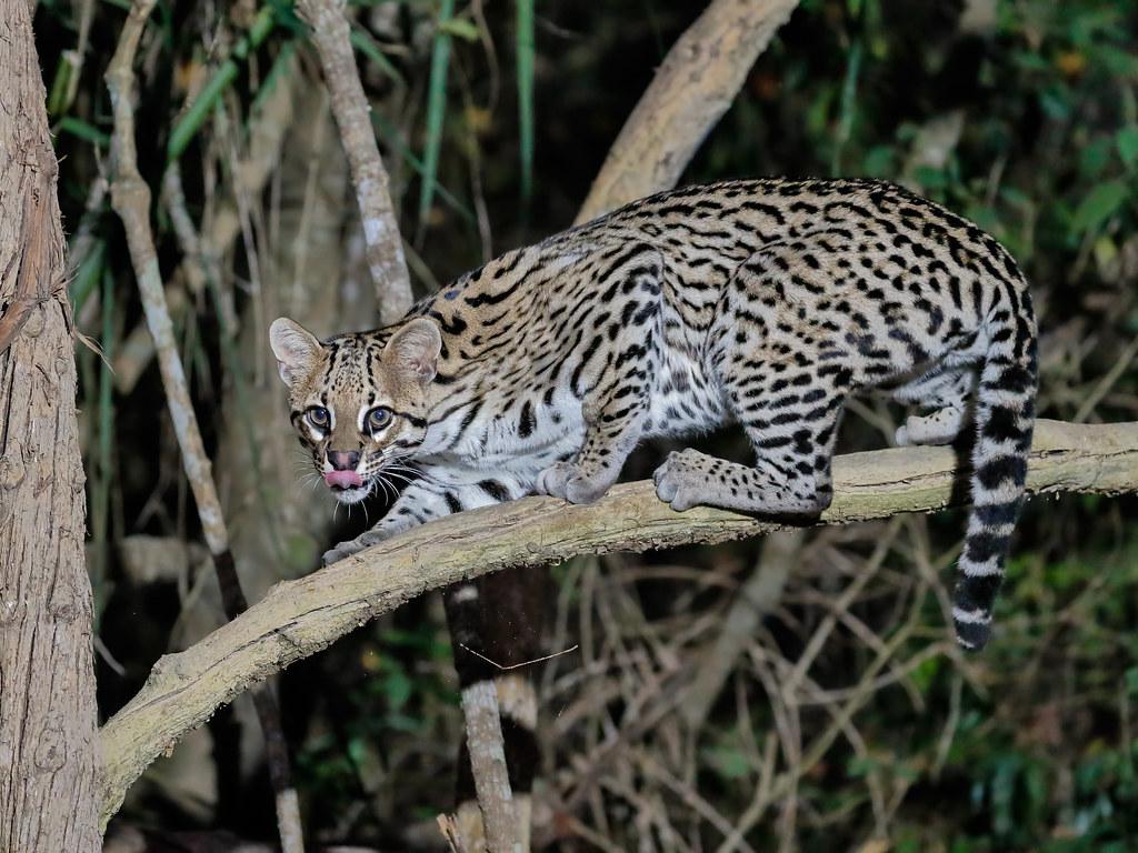 Pantanal_1269