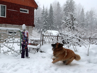 Snowy winter | by irishishka