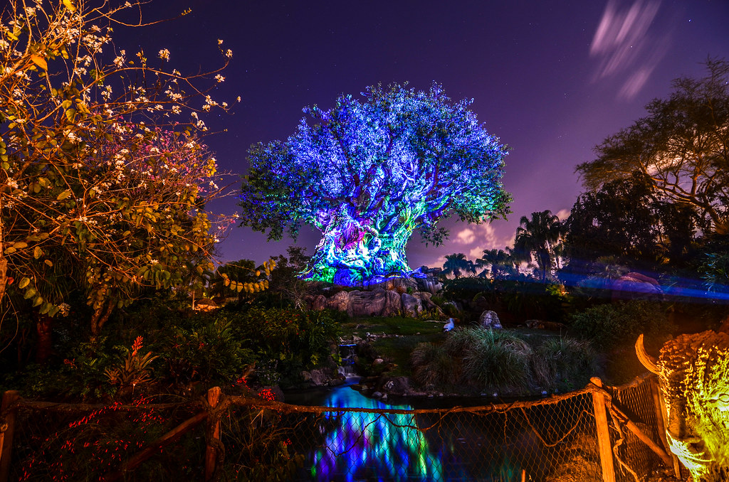 Tree of Life night AK