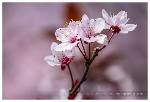 Le retour du printemps
