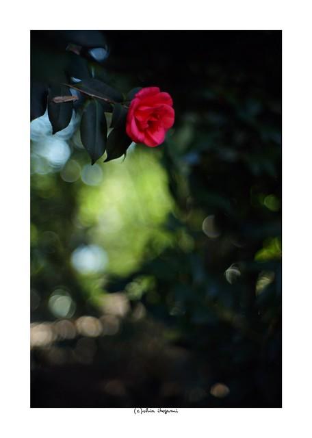 2019/3/9 - 1/21 photo by shin ikegami. - Lomography New Jupiter 3+ 1.5/50 L39/M