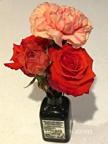 little vase | by PlantPostings