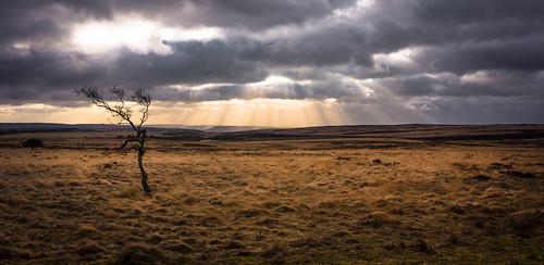 tree sun rays peakdistrict derbyshire sunset clouds sky nikon d7200 tokina 1120mm wideangle ultrawide scenics landscapes ngc