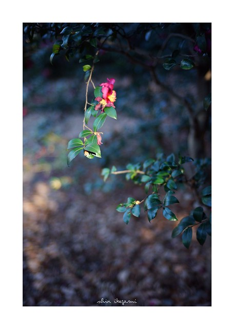 2019/1/5 - 6/18 photo by shin ikegami. - SONY ILCE‑7M2 / Carl Zeiss C Sonnar T* 1.5/50 ZM