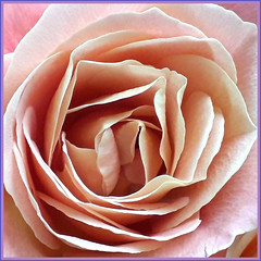 What's in a name? That which we call a rose, by any other name would smell as sweet.