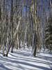 Forêt en hiver by vincent Bouchet