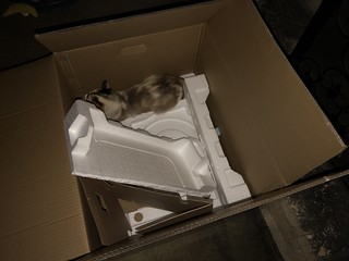 Boxcat | by I am R.