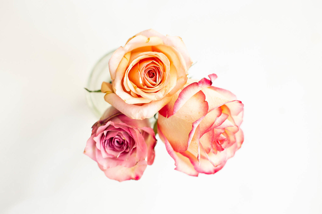 Top View Of Small Colorful Roses On White Background Flickr