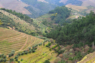 Vine covered valleys, Douro Valley, Portugal | by BuzzTrips