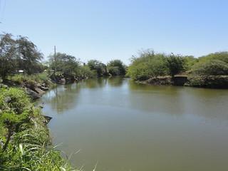Rio Jacaguas, a 100 pies de su desembocadura en el Mar Caribe, mirando hacia el sur, Bo. Capitanejo, Juana Diaz, PR (DSC05621)