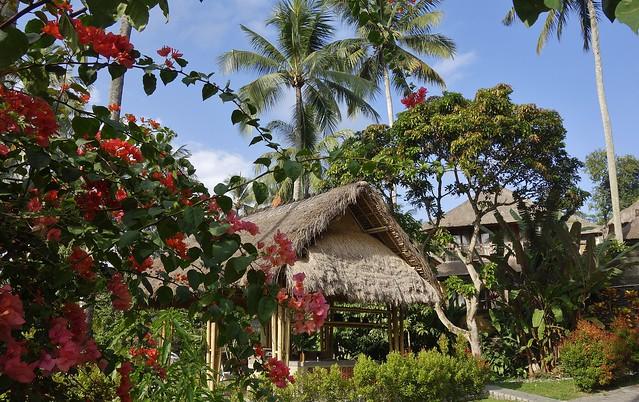 INDONESIEN, Bali , Rund um unser Hotel in Ubud, 17840/11039
