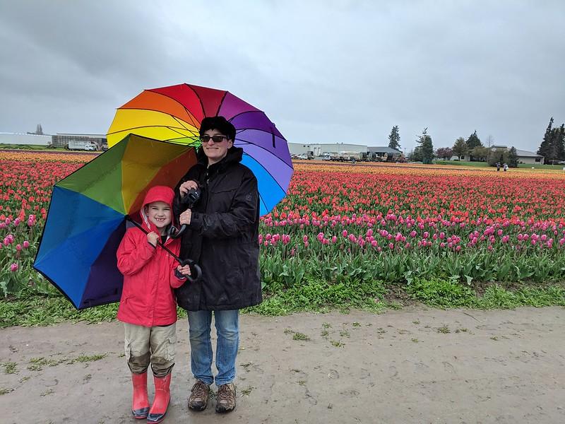 Tulips and Rainbow Umbrellas
