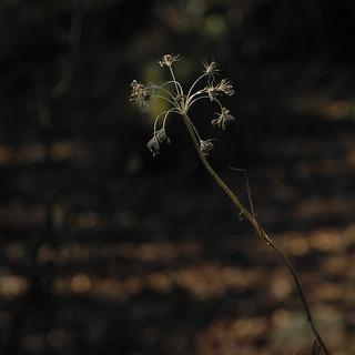 A thin strip of bright light falls | by llambreig