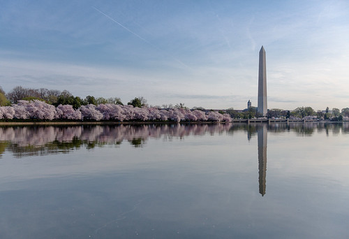 Cherry Blossoms - Tidal Basin with Washington Monument