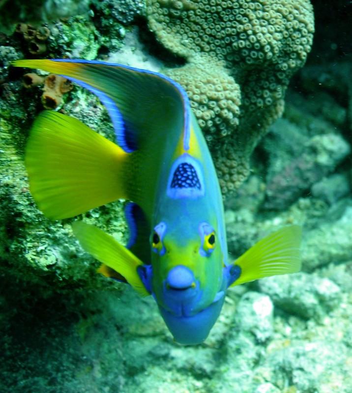 Aruba scuba shots videos 008