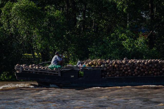 Coconut delivery guy. Ben Tre, Vietnam