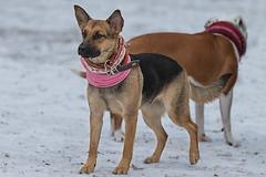 Hund 10_3b.jpg