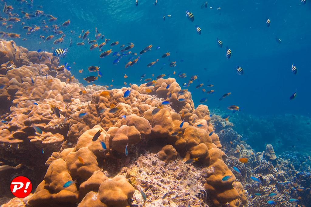 珊瑚及小魚