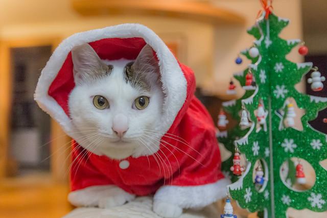 Happy Holiday 佳節快樂