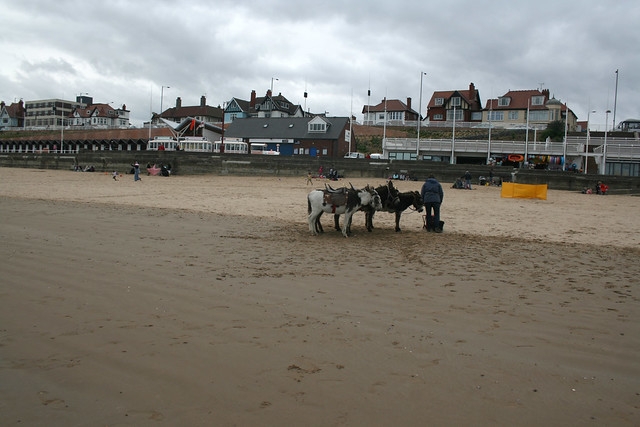 Donkeys on the beach at Bridlington