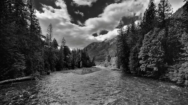 Upstream the Stehekin River with Views to Trees and Mountains (Black & White, North Cascades National Park Service Complex)