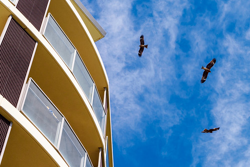 Be aware of the kites on Enoshima : 鳶に注意!!! | by Dakiny